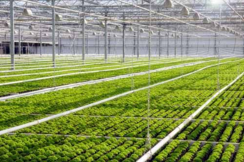 Horticulture farm